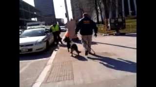 Rpd K9 - Spring Dog Walk - 3/7/2012 Downtown Rochester, Ny - 10 Am