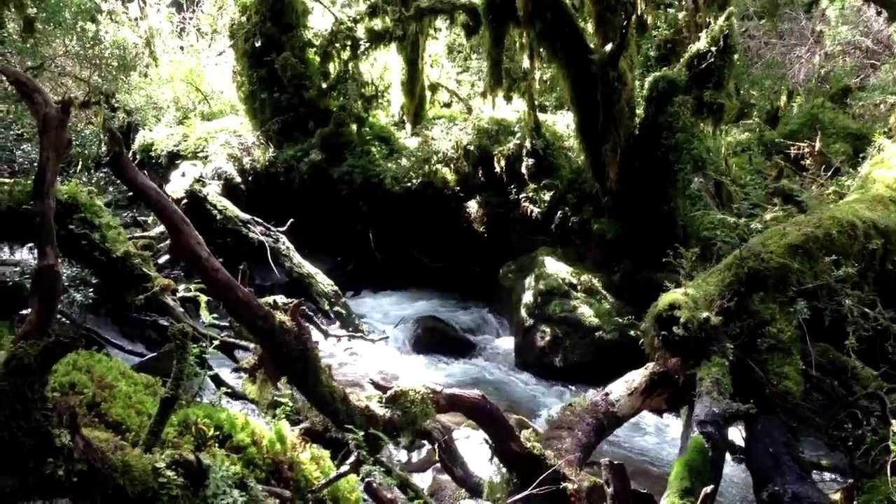 El Bosque Encantado Puyuhuapi Chile Youtube