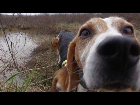 Kentucky Rabbit Hunt - 11 Rabbits Killed