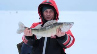 Зимняя рыбалка - судак..