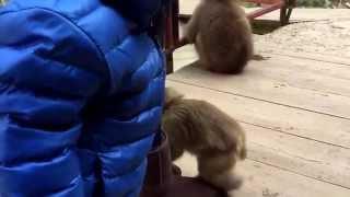 子猿が、ムートンブーツを仲間と勘違い?乗って毛繕い。