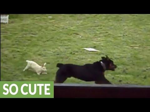Bunny rabbit makes a very unusual friend