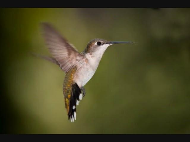 voo-do-beija-flor-elisa-cristal-eduardo-cerejo