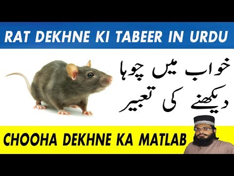 khawab ki tabeer in urdu hindi | meaning of dreams ni hindi | khwab mein chuha dekhna from YouTube · Duration:  4 minutes 21 seconds