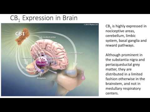 The Endocannabinoid System in Health and Disease - Dr Ethan Russo - Part 1