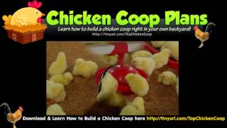 Build Chicken Coop - Portable Chicken Coop Plans