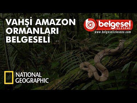 Vahşi Amazon Ormanları Belgeseli