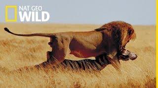 Tydzien z najgroźnieszymi zwierzętami - oglądaj na Nat Geo Wild