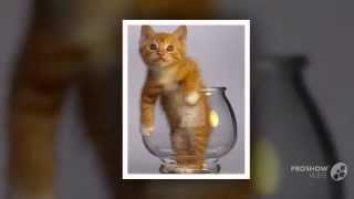 Красивые милые котята и классные смешные подписи!