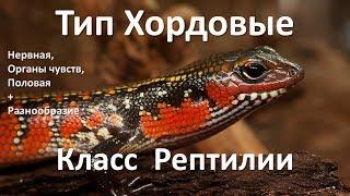 14.2 Рептилии часть II (7 класс) - биология, подготовка к ЕГЭ и ОГЭ 2018