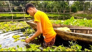 Amazing Net Fishing in Rice Field | Traditional Fishing Trap in Village | Live Fish Hunting 2018