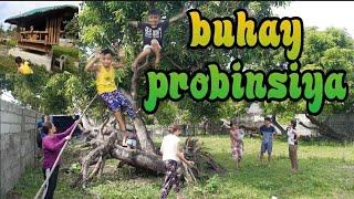 BUHAY SA PROBINSIYA(HARVESTING MANGGA sa BUKID)@IVY MIRANDA VLOG