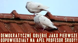 Komunikat Ministerstwa Prawdy nr 705: Środa podziemna na dachu