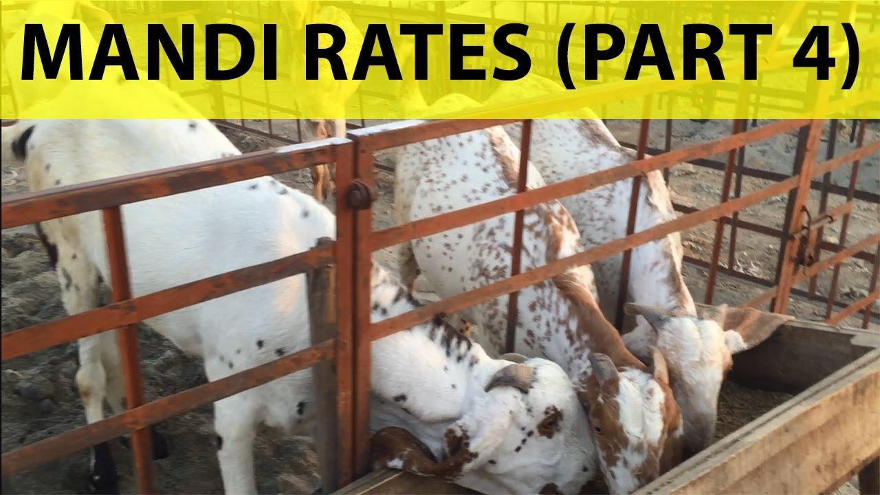 Bhatta Chowk Mandi 2021 | Bakra Prices (Part 4) | Mandi Rates Info