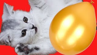 🍄 🚀 Funny video about kitty Masy and balloon