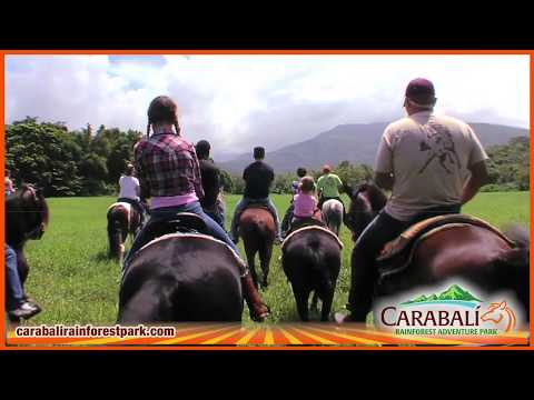 Horseback Riding at the Forest - Carabali Rainforest Adventure Park Puerto Rico