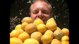 How2 Make Lemonade When Life Gives You Lemons