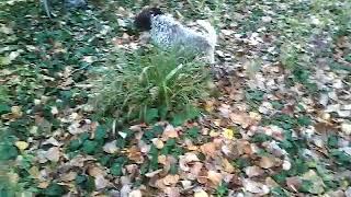 La felicità e il naso a terra di un cucciolo da tartufo cosa ci fa capire