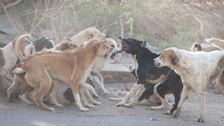 Собаки-людоеды в Истре.Дюше 10 месяцев.Онлайн.Воспитание и дрессировка собаки
