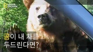 곰의 잔칫상이 돼버린 도로