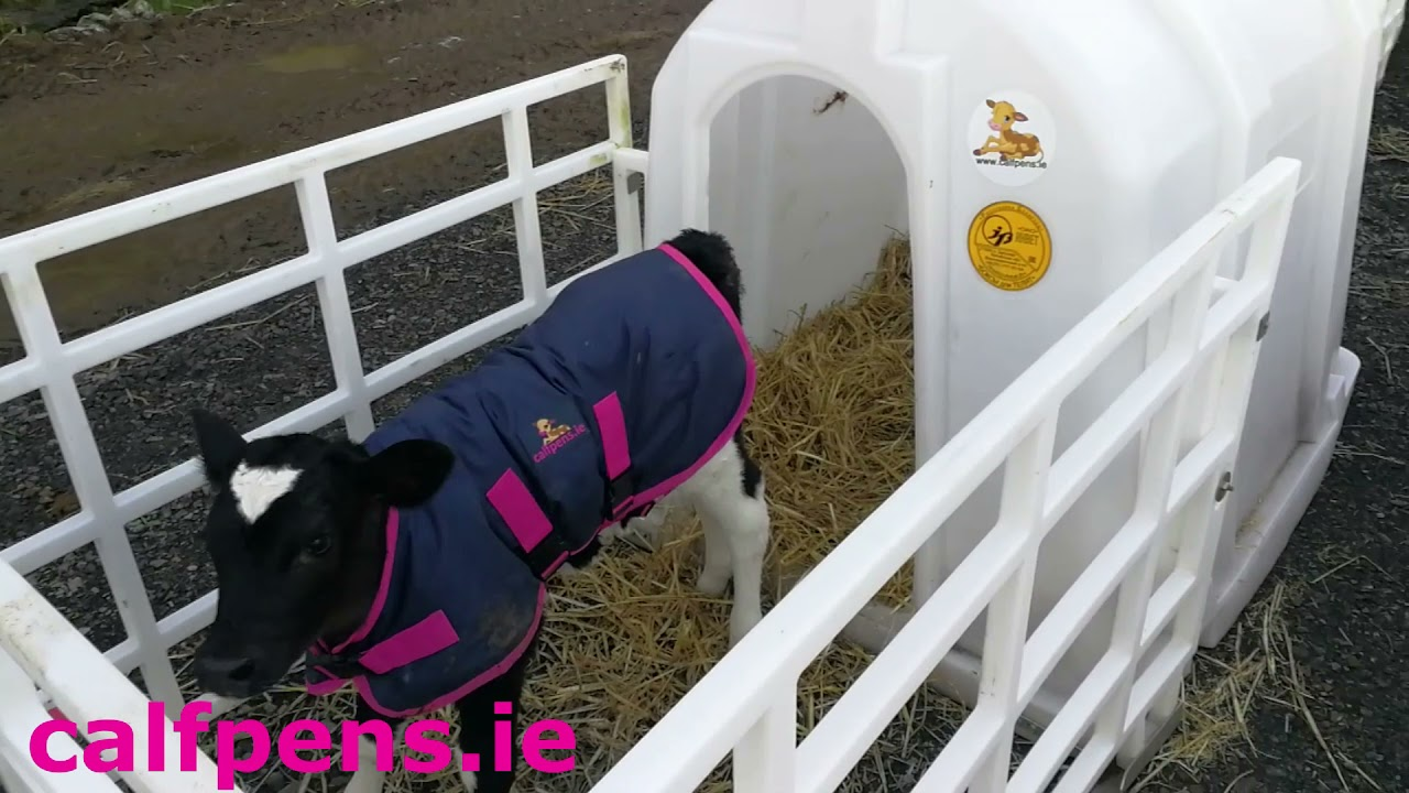 Healthy calf housing does have to be expensive