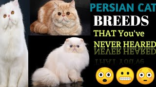 TYPES OF PERSIAN CAT |HOW TO IDENTIFY THEM |PEKE FACE, DOLL FACE, EXOTIC SHORT HAIR, TEACUP ETC..!