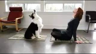 Pametni pas