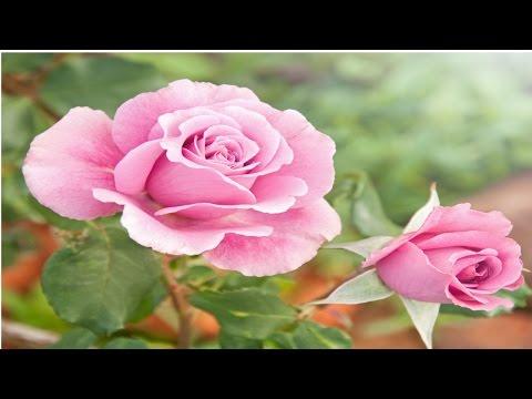 Clique e veja o vídeo Jardinagem - Floricultura