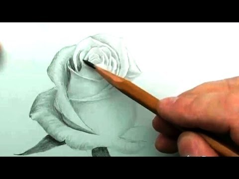 видео: КАК нарисовать БЕЛУЮ РОЗУ карандашом
