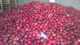 fresh pomegranate suppliers,anar suppliers,pomegranate farms egypt