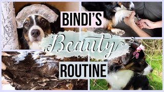 My Dog's Beauty Routine