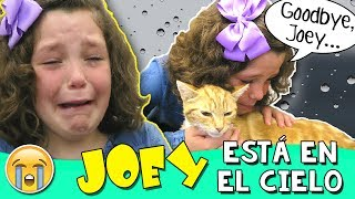 😿 Nuestro Gatito está EN EL CIELO (No clickbait) 💔 Le decimos ADIÓS a JOEY 💔 El VLOG más TRISTE thumbnail