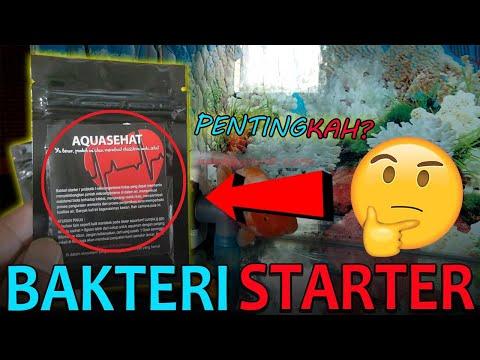 2 Cara Memberikan Bakteri Starter Pada Aquarium Ikan Mas Koki: Khusus Pemula