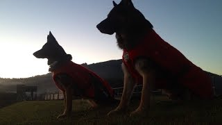 Search & Rescue Dogs - 'dual' Free Tracking