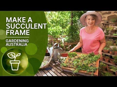 Make A Vertical Succulent Frame