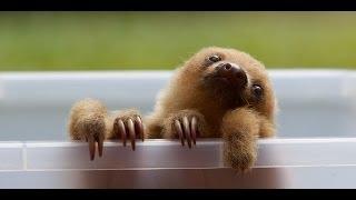 Poop-Eating Sloth Moths