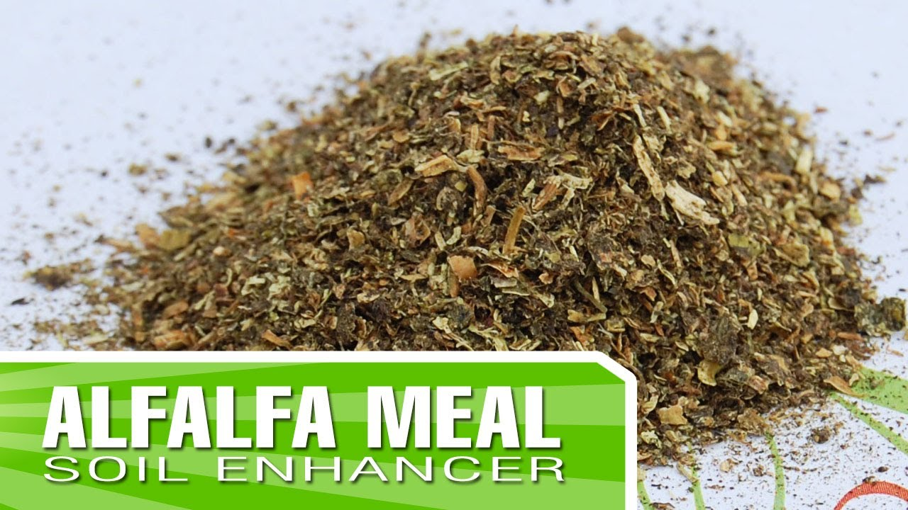 Alfalfa Meal - Mixing with your soil to enrich your garden - YouTube