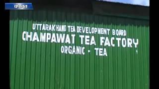 चंपावत में उगाई जा रही है चाय पत्ती Tea cultivation in Almora