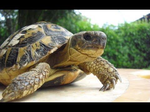 Как подготовить земляных черепах к зимней спячке в домашних условиях.