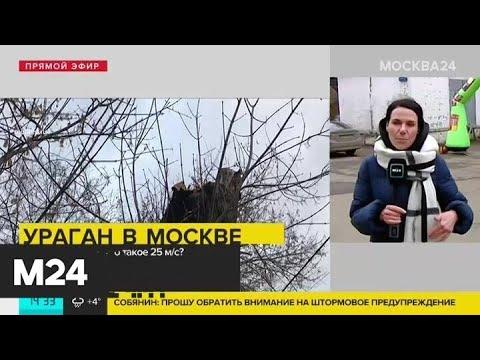 Видео: МЧС советует москвичам не выходить на улицу из-за ураганного ветра - Москва 24