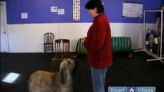 How to Make a Dog Stay : How to Introduce