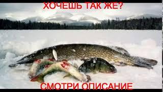 клевая рыбалка видео якутия последнее