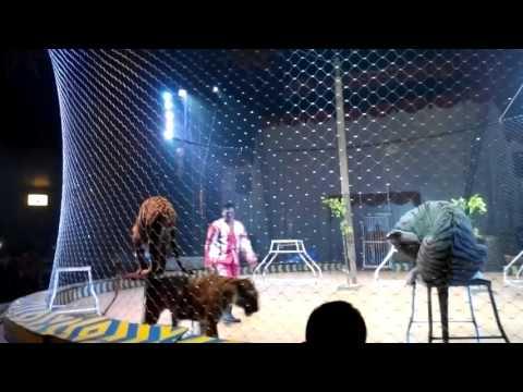 Oriental Circus Indonesia Cirebon #Part2