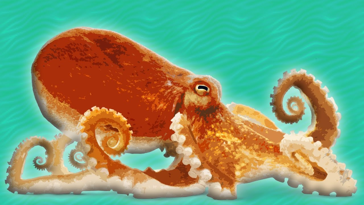 octopus for kids ocean animals for kids youtube