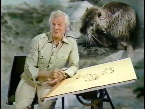Animals in Action, the Invaders  1980s TV