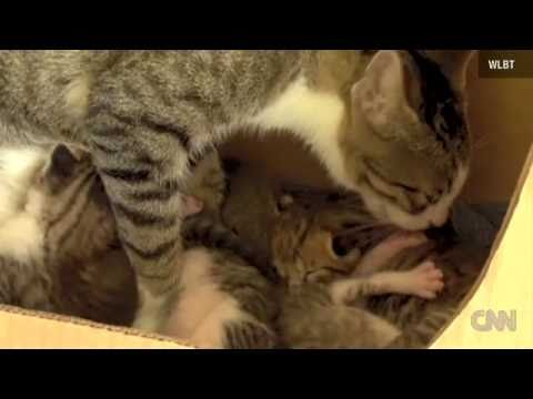 Baby squirrel learns to purr after falling out of a tree, and being nursed by a momma cat and raised with kitten family