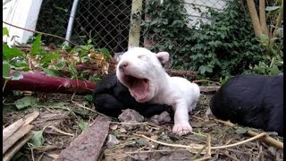 A puppy in trouble (happy ending!) - Stray Rescue of St.Louis