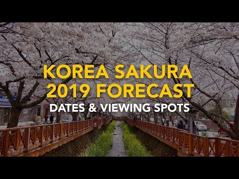 Cherry Blossom in Korea (2019): Dates and Viewing Spots Mp3