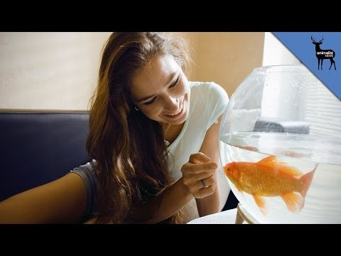 Do Goldfish Really Have A 3 Second Memory?