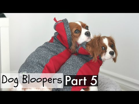 DOG BLOOPERS | Funny outtakes part 5 | Dogs and Puppies | Herky & Milton Cavalier King Charles
